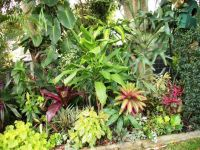 1000+ ideas about Tropical Gardens on Pinterest ...