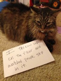 17 Best ideas about Cat Shaming on Pinterest | Funny cat ...