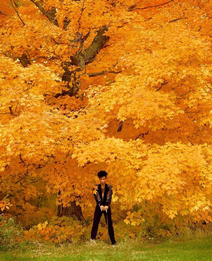 St Paul Mn Fall Wallpapers 17 Best Images About Fall Foliage On Pinterest Fiery Red