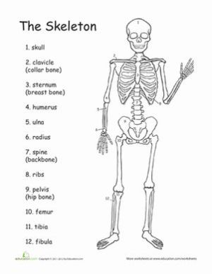 17 Best ideas about Skeletal System Activities on