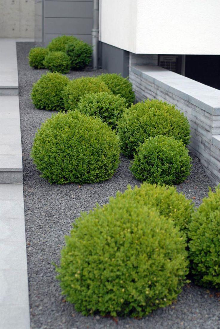 Best 20 Minimalist Garden Ideas On Pinterest Simple Garden