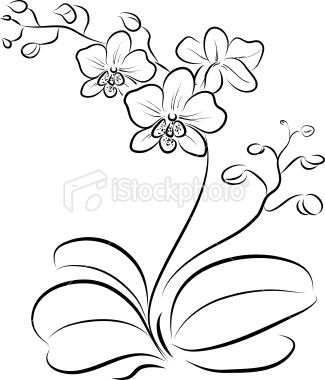 Orchid outline INK Pinterest Orchids