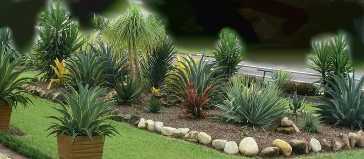 Yucca Agave Plants Landscaping Garden Design Ideas Succulents