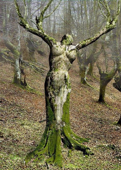 """A dryad is a tree nymph, that is a female spirit of a tree, in Greek mythology. In Greek drys signifies """"oak"""". Thus dryads are specifically ...:"""