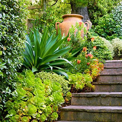 25 Best Ideas About Mediterranean Garden On Pinterest