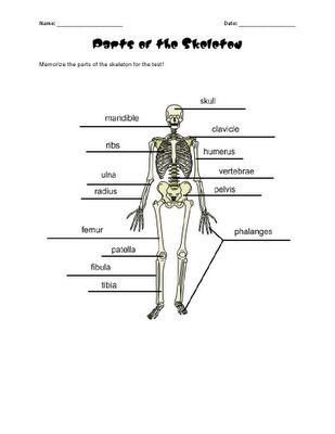 1000+ images about Unit Studies: Human Body (Anatomy) on