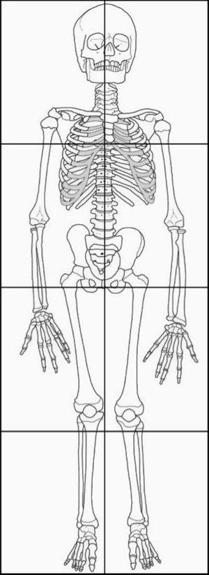 25+ best ideas about Skeleton craft on Pinterest