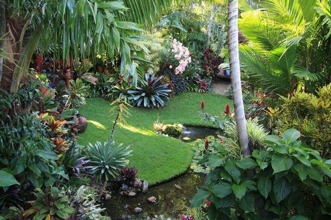 Dennis Hundscheidts garden in Sunnybank Brisbane Great home garden consult with Dennis