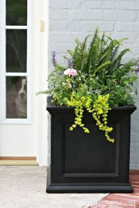 17 Best ideas about Front Door Plants on Pinterest | Front ...