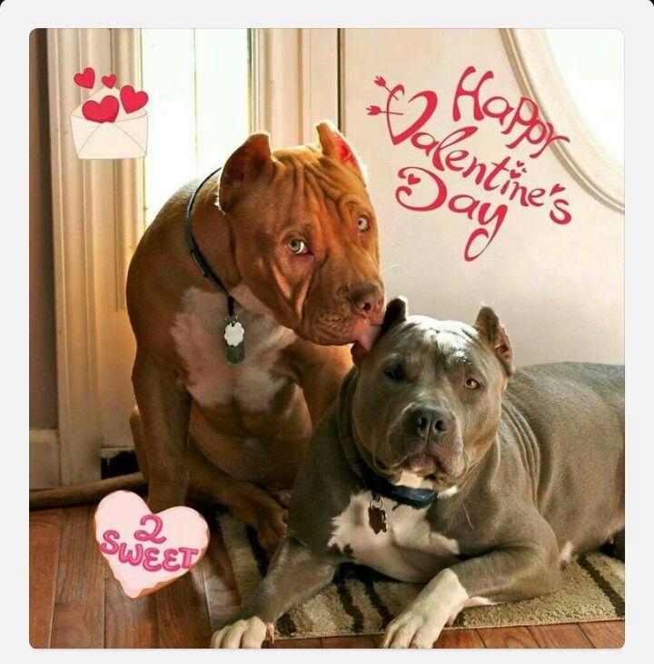 Happy Valentines Day Holiday Celebrations