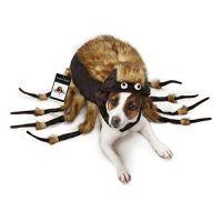 Best 25+ Dog spider costume ideas on Pinterest