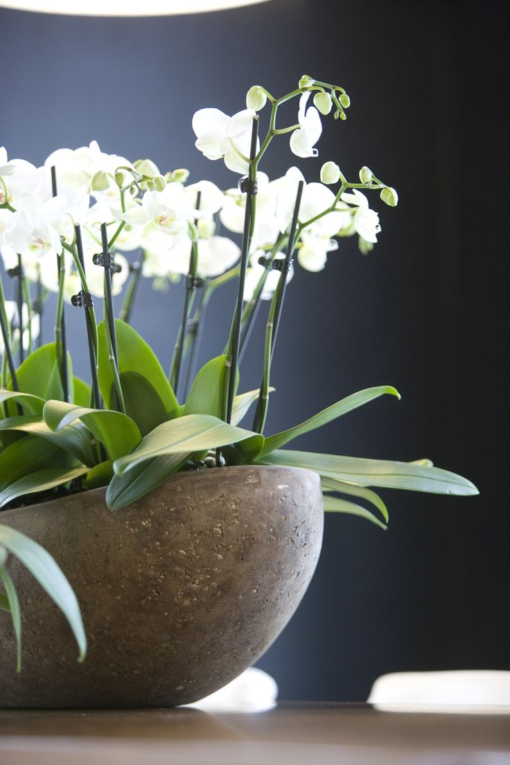 Beautiful Large Orchid Display Entry Saarinen Table Project Seattle Pinterest Beautiful