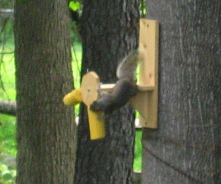 2 x 4 adirondack chair plans kids metal chairs squirrel feeders homemade | home-made twirler ღ•*¨*•ღ houses, ...