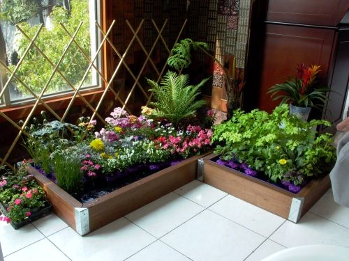 39 Best Images About Indoor Vegetable Garden On Pinterest