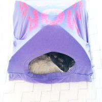 1000+ ideas about Cat Tent on Pinterest | Diy Cat Tent ...