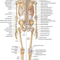 Human Skeleton And Muscles Diagram Towbar 12s Electrics Wiring Home Anatomy Physiology For Medical Assistants Libguides At Chart Of Click To See Full Size
