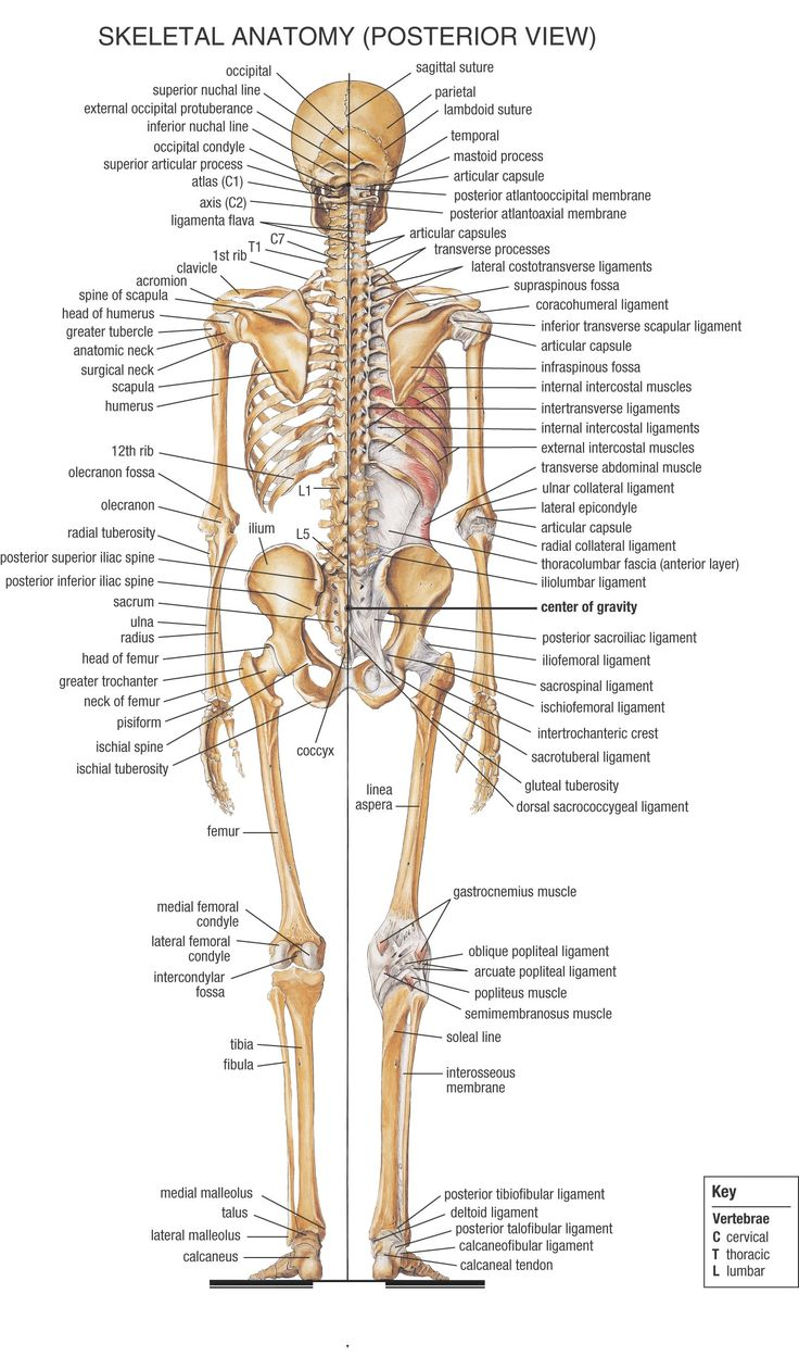 medium resolution of anatomy physiology for medical assistants