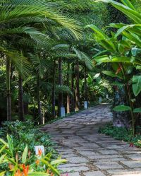 1999 best images about tropical gardens on Pinterest ...