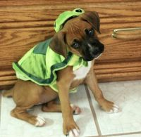 17 Best images about Halloween costume ideas on Pinterest ...