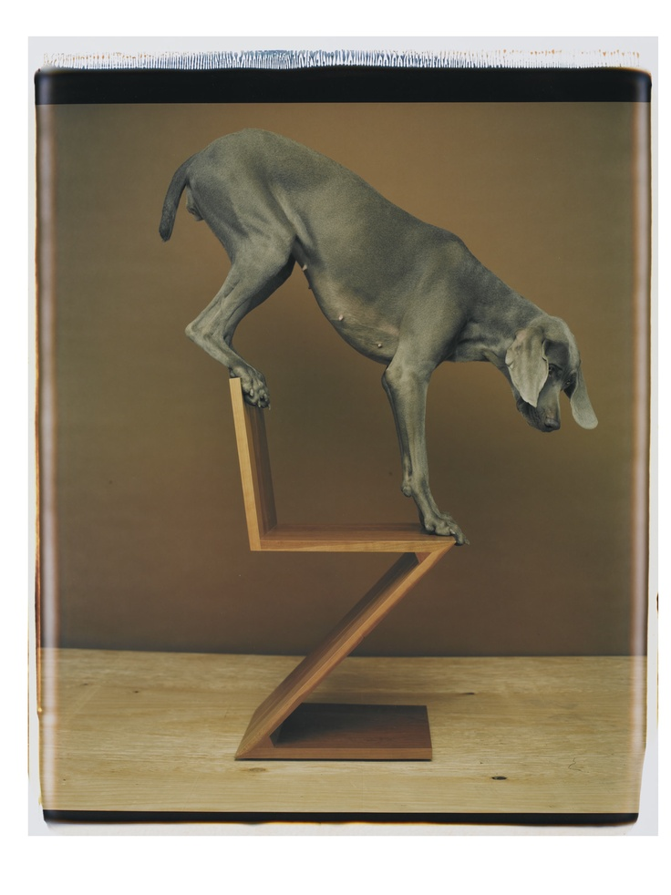 gerrit rietveld crate chair lifetime adirondack 17 best images about william wegman dogs on pinterest | the magic flute, puppys and man ray