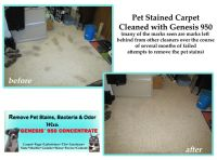 1000+ images about Best Pet Stain Remover on Pinterest ...