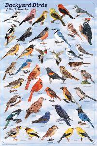 25+ best ideas about Bird identification on Pinterest ...