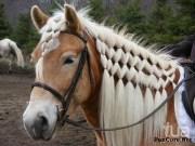 horse mane styles horses