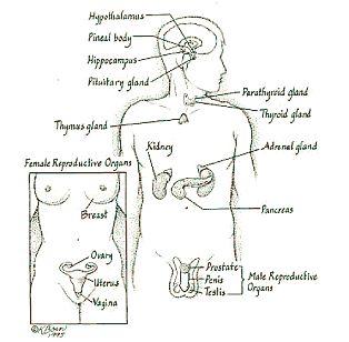 1000+ images about Nursing (Endocrine System) on Pinterest
