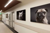 821 best images about Veterinary on Pinterest | Waiting ...
