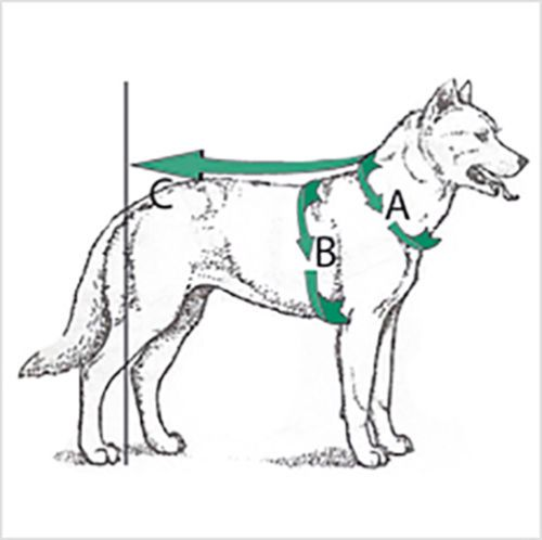 Toy Dogs Harness