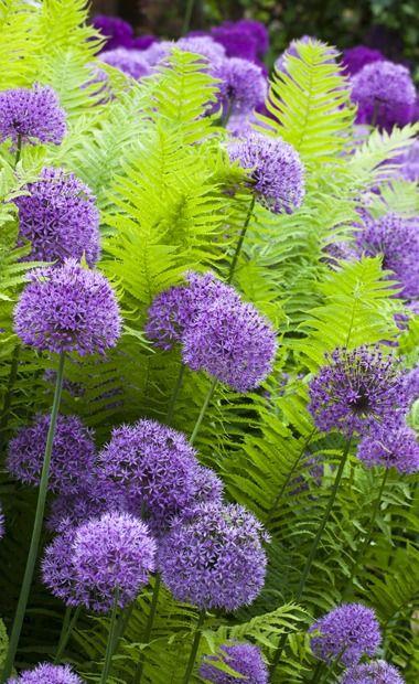 25 Best Ideas About Ferns Garden On Pinterest Ferns Cottage