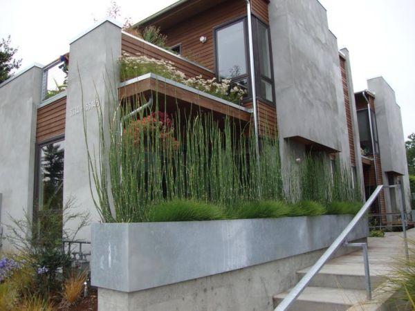 horsetail planter standard
