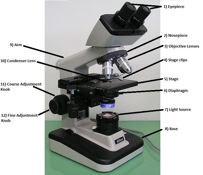 label microscope diagram worksheet 2003 porsche cayenne wiring parts and functions of a light (part ii) | microscopic pinterest lights