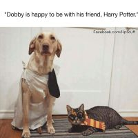 1000+ ideas about Dobby Costume on Pinterest