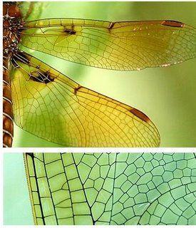 25 best ideas about Voronoi diagram on Pinterest   System architecture diagram, Tree structure
