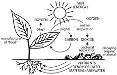 25+ best ideas about Carbon Dioxide Cycle on Pinterest
