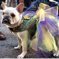 Mardi gras tutu- dog costume | Costume/Outfit Theme ...