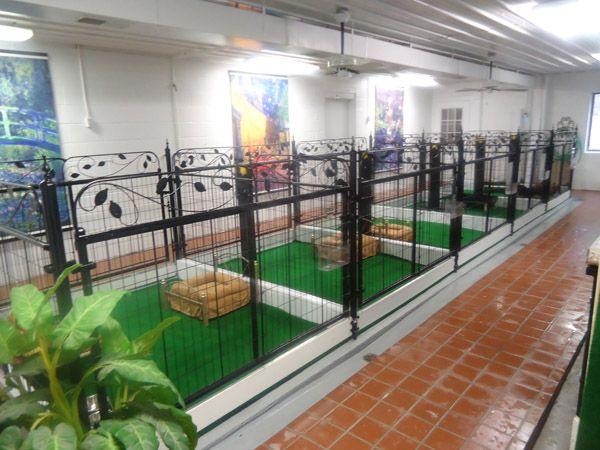 NEAR TRAVERSE CITY, MI Deluxe Small Dog Boarding Kennel