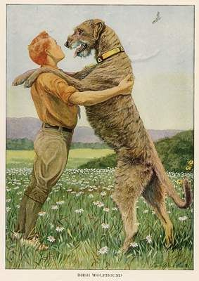 Image result for DOG-dog-as-man's-best-friend  public domain