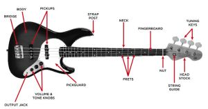 The Anatomy of a Jazz Bass | THE BASS | Pinterest | Jazz, Search and The o'jays