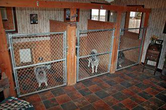 Commercial Dog Kennels Inside  Lobo Lodge Interior Kennel