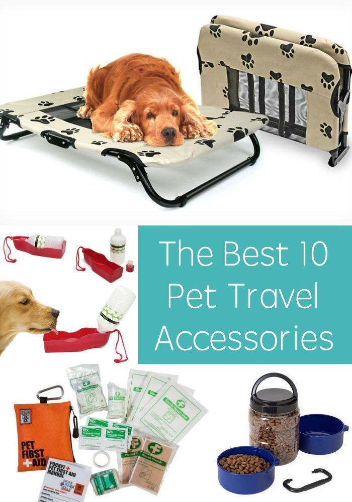 2325 best images about Cool Dog Accessories on Pinterest