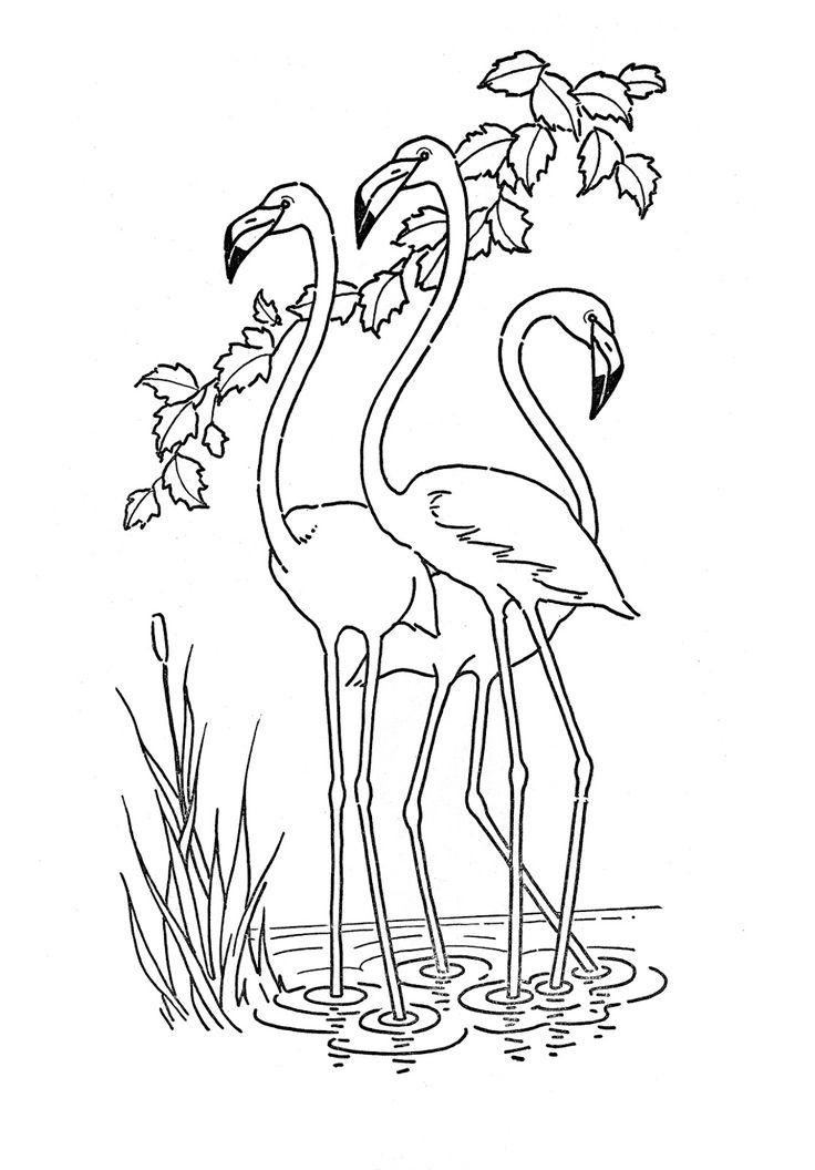 25+ best ideas about Flamingo Color on Pinterest