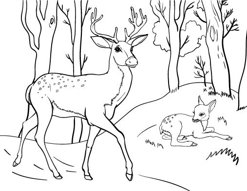 Printable deer coloring page. Free PDF download at http