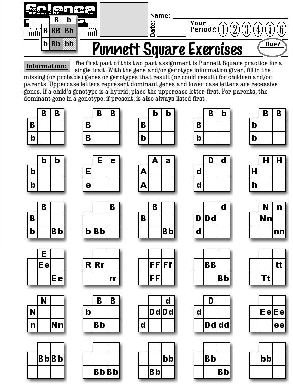 For Applied Biology....Worksheets About Punnett Squares