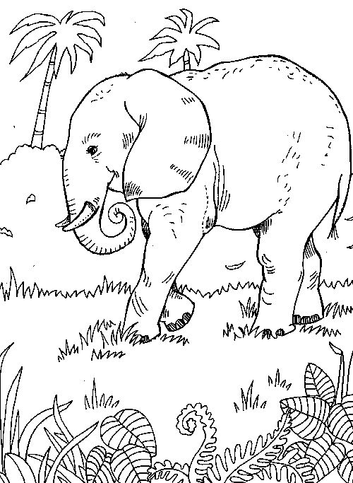 Elephant Jungle Scene (From