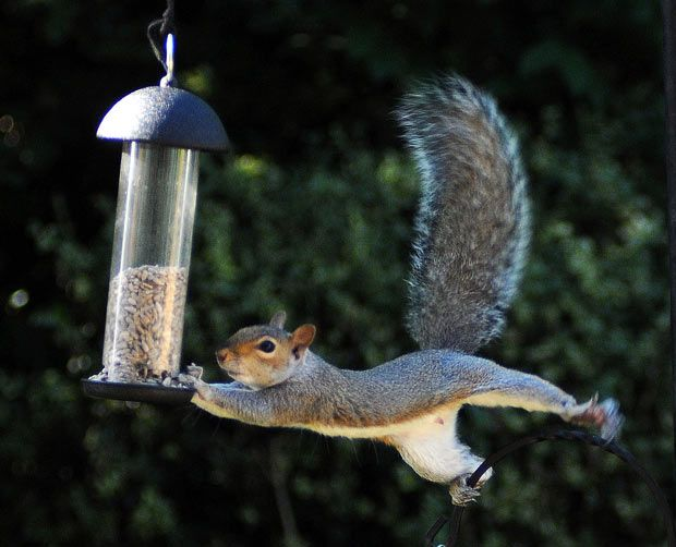 squirrel chair feeder kitchen covers for sale 17 best images about february national bird feeding month on pinterest | feeders ...