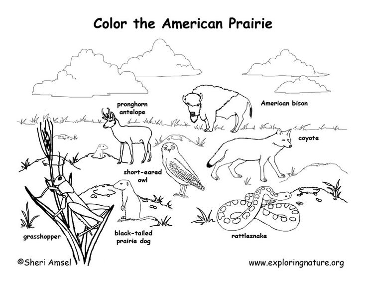 Ecosystem Food Chain Coloring Pages Coloring Pages