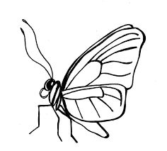62 best images about wire art insects on Pinterest