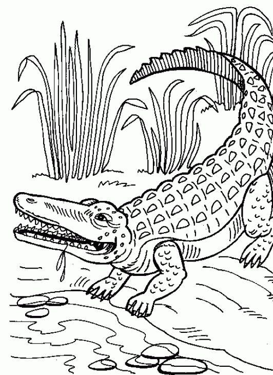 350 best images about Alligators, crocodiles, caiman on